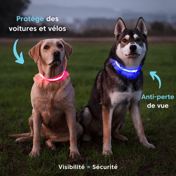 collier, lumineux, chien, woafy