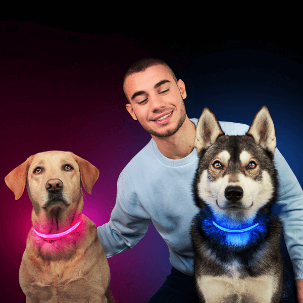 collier, chien, lumineux, lumiere, clignotant, led, chiot, chat