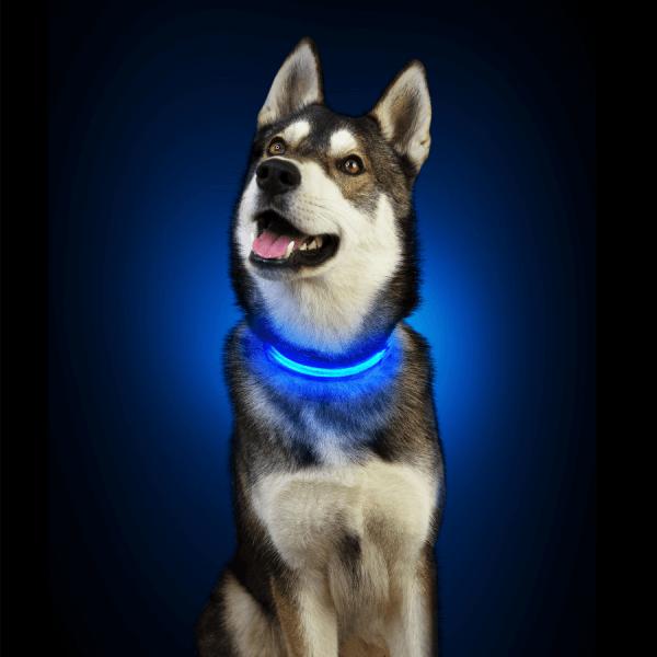 collier, lumineux, rechargeable, bleu, usb, chiens, chien, led