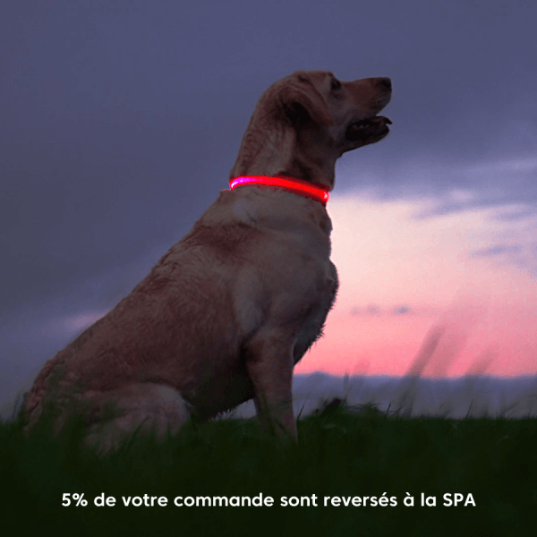 collier, lumineux, chien, labrador, led, recharge, usb, spa