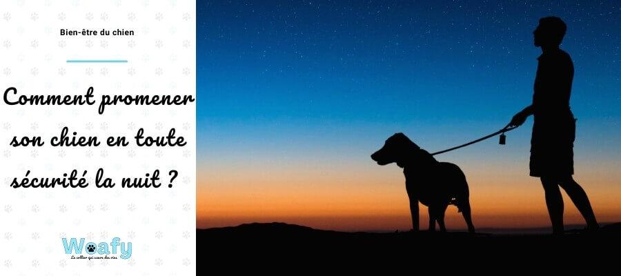 chien, balader, promener, nuit, nocturne, conseil, proteger