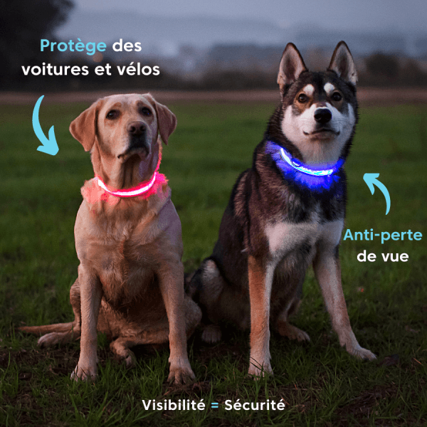 collier, chien, labrador, husky, lumineux, rechargeable