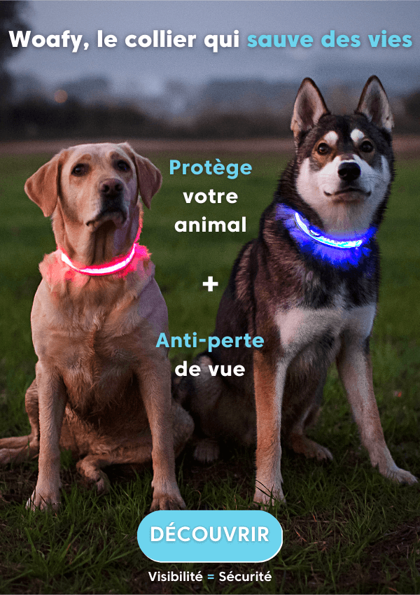 collier, chien, chat, chiot, lumineux, led, rechargeable, usb