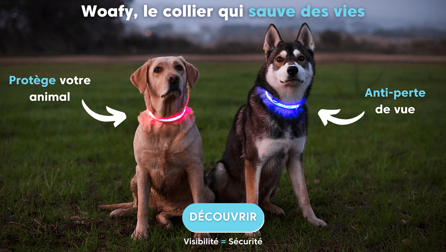 offre,, collier, chien, promo, lumineux, led, nuit, husky, labrador