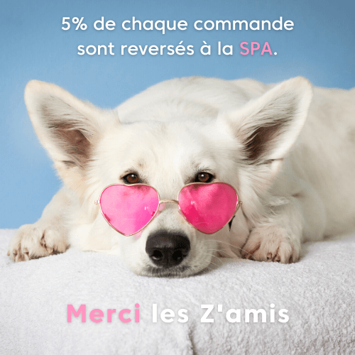 spa, protection, animaux, chien, chat, chiot, don