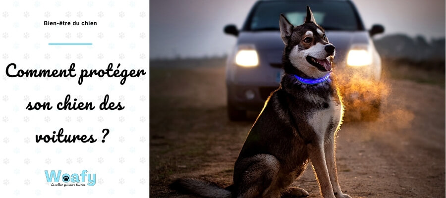 balade, proteger, chien, promenade, voiture, husky, nuit