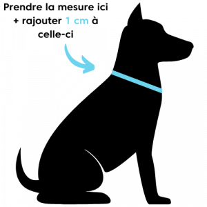 collier, chien, chat, canin, taille, tour, cou, mesure