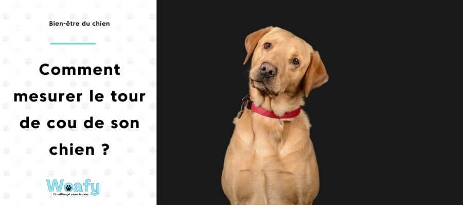mesurer, collier, chien, chiot, tour, cou, taille