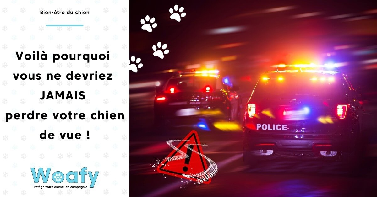 chien, protege, nuit, voiture, chiot, police