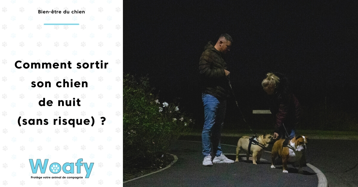 sortir, promener, balader, chien, chiot, nuit, nocturne